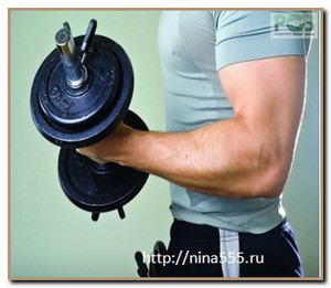 скелетные мышцы