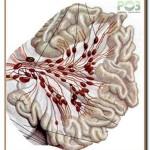 группы лимфатических узлов