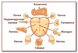 Язык без костей в роли диагноста